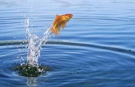 fishoutofwater