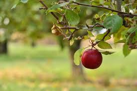 lowhangingfruit