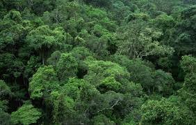 canopiedforest